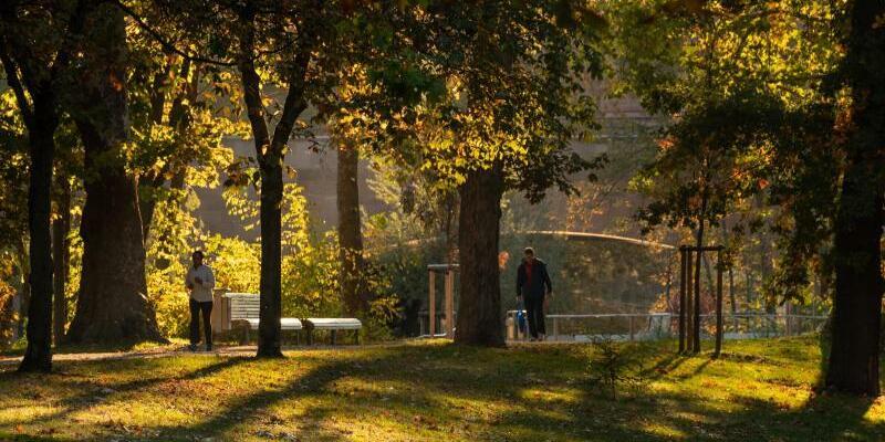 Goldener Herbst - Foto: Daniel Karmann