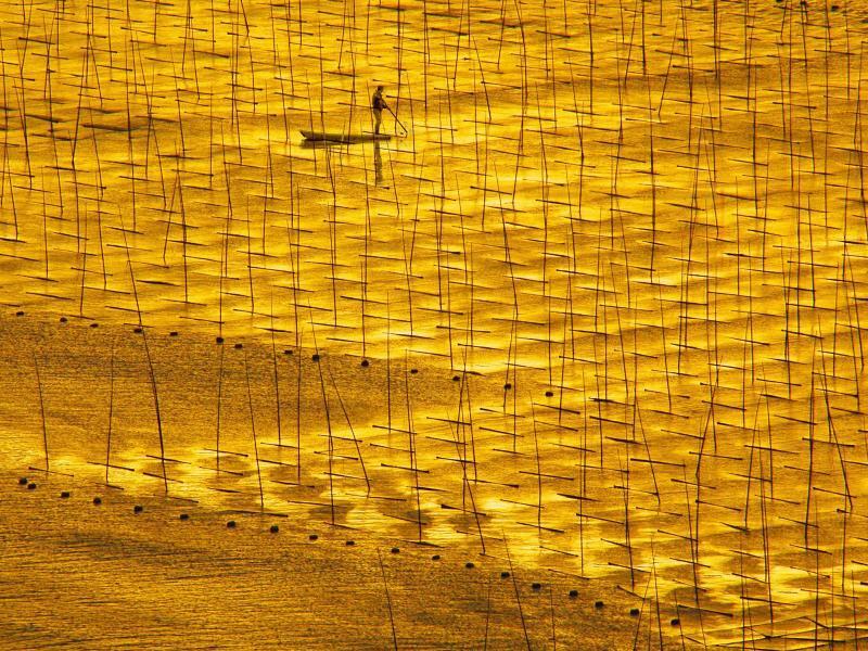 Goldener Moment - Foto: Mit Licht gemalt:Ein Bauer arbeitet auf einer Seealgen-Farm in der chinesischen Stadt Ningde. Foto:Pan Zhengguang/XinHua