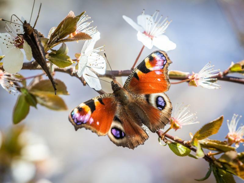 Schmetterling - Foto: Frank Rumpenhorst/Illustration