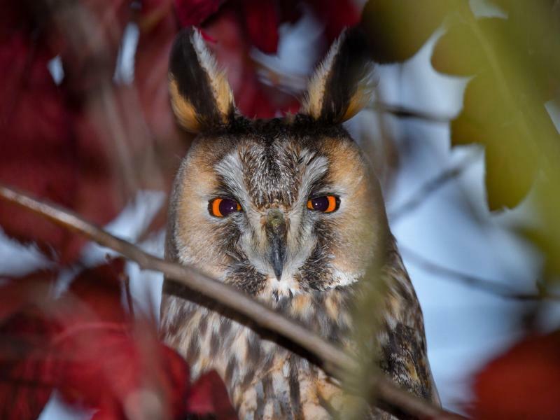 Strenger Blick - Foto: Patrick Pleul