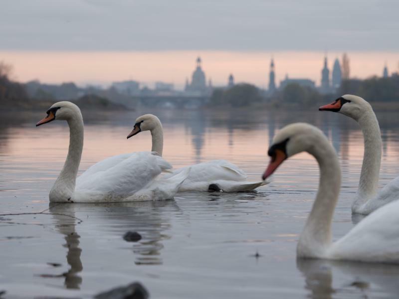 Auf der Elbe - Foto: Sebastian Kahnert
