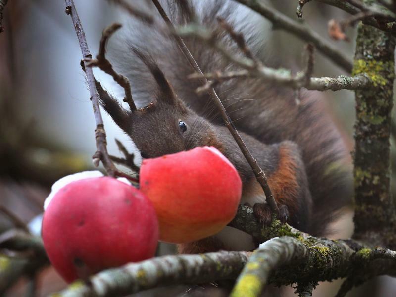 Noch etwas Obst - Foto: Karl-Josef Hildenbrand
