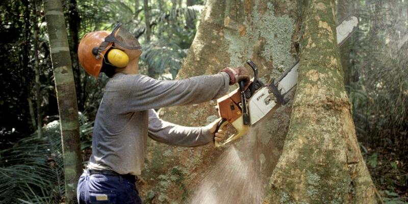 Abholzung im Regenwald - Foto: Abholzung im Regenwald. Foto:Werner Rudhart