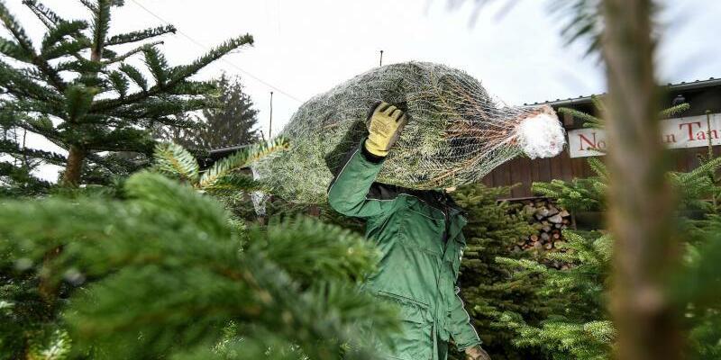Weihnachtsbaumverkauf - Foto: Felix Kästle