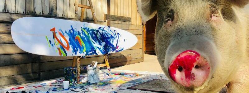 Pigcasso: Saumäßige Kunst in Südafrika - Foto: Joanne Lefson
