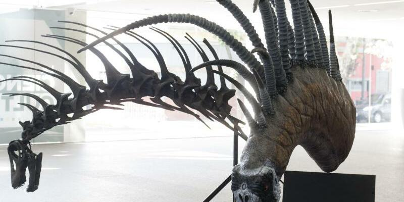 Stachel-Dino - Foto: Fundación Azara
