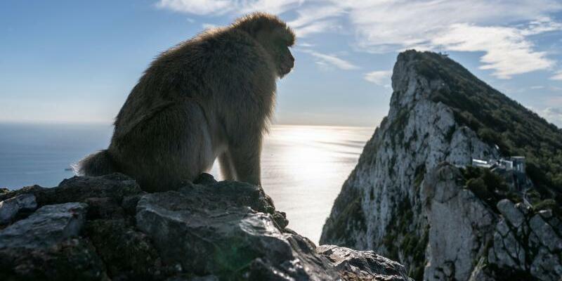 Berberaffe in Gibraltar - Foto: Frank Rumpenhorst