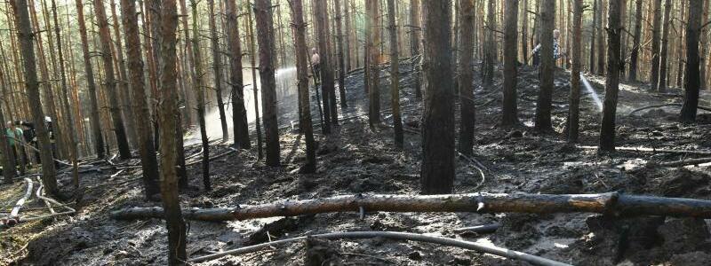 Verbrannte Bäume - Foto: Julian Stähle