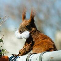Eichhörnchen-Flüsterer - Foto: Lisa Ducret