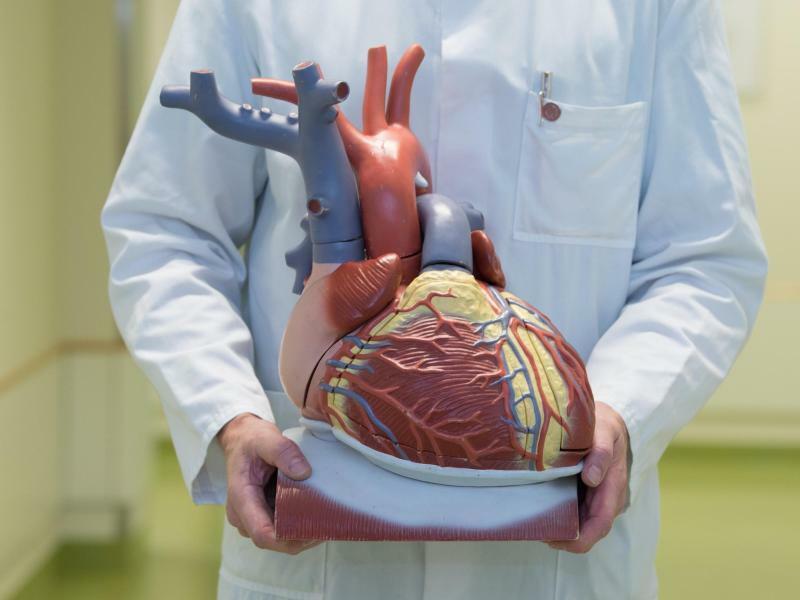 Herzerkrankungen - Foto: Sebastian Kahnert