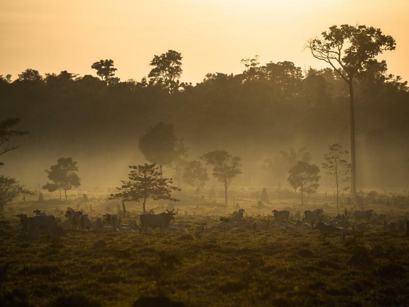 Tropenwald - Foto: Thiago Foresti/AAAS