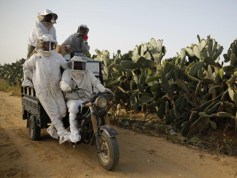 Honigernte in Palästina - Foto: Hatem Moussa/AP