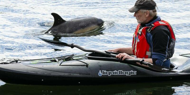 Delfin Gast in Kieler Förde - Foto: Frank Molter