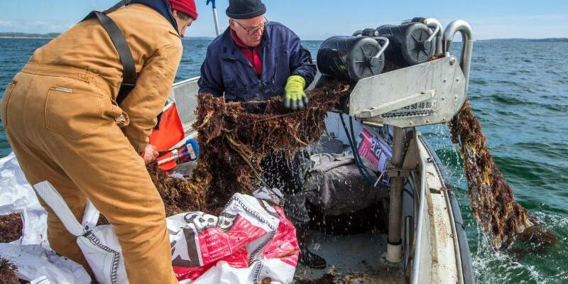 Umweltschützer holen Geisternetz aus der Ostsee - Foto: Jens Büttner
