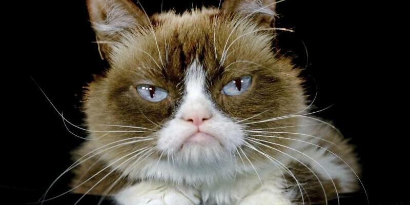 Grumpy Cat - Foto: Richard Vogel/AP