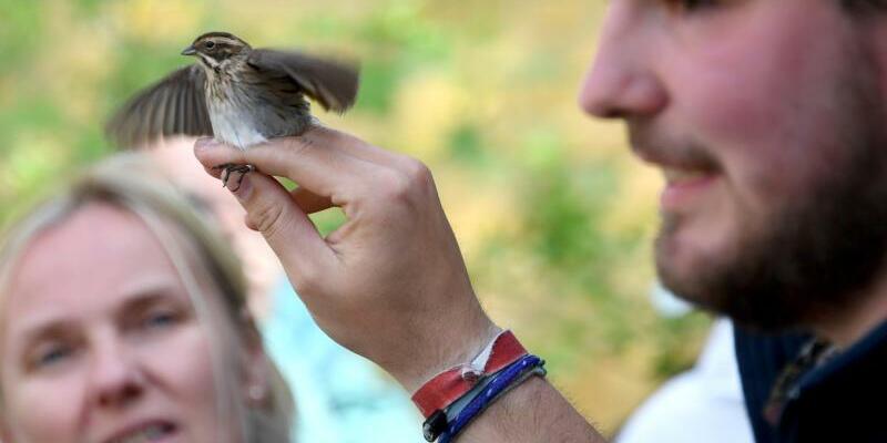 Die Vogelberinger von Helgoland - Foto: Carsten Rehder