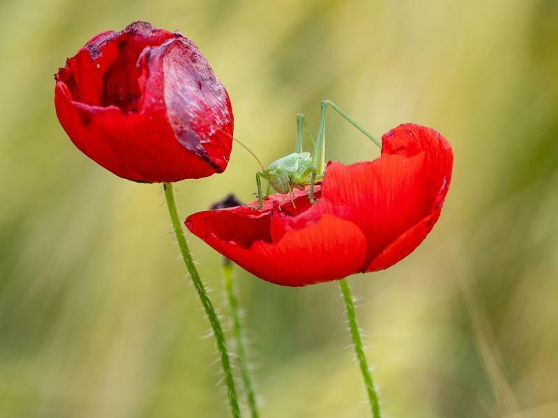In der Blüte - Foto: Fabian Sommer
