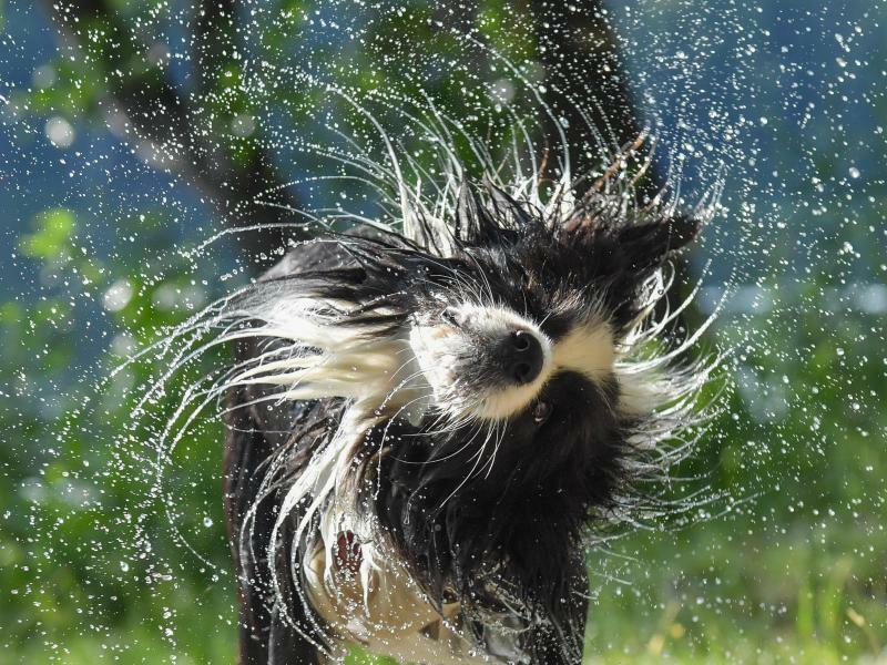 Tierische Abkühlung - Foto: Patrick Pleul