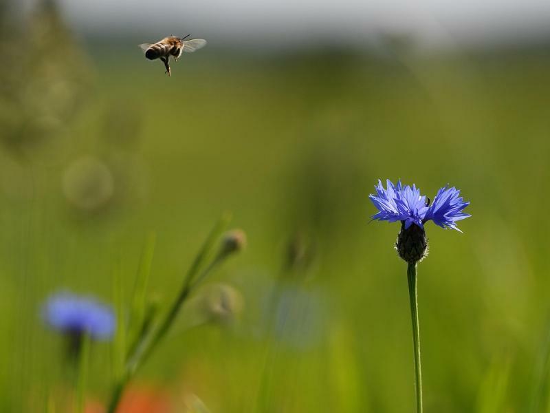 Landeanflug - Foto: Angelika Warmuth