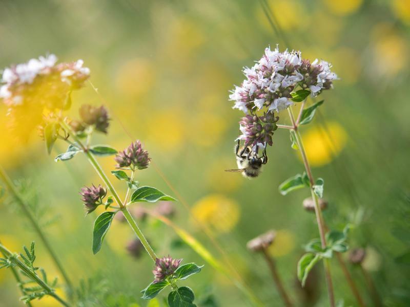 Insekten auf der Wiese - Foto: Sebastian Gollnow