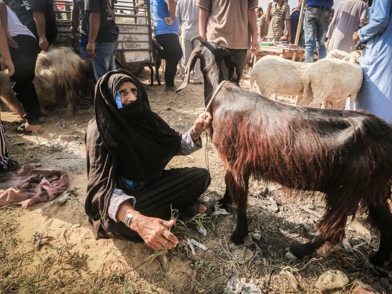 Opferfest - Foto: Mahmoud Khattab/Quds Net News via ZUMA Wire