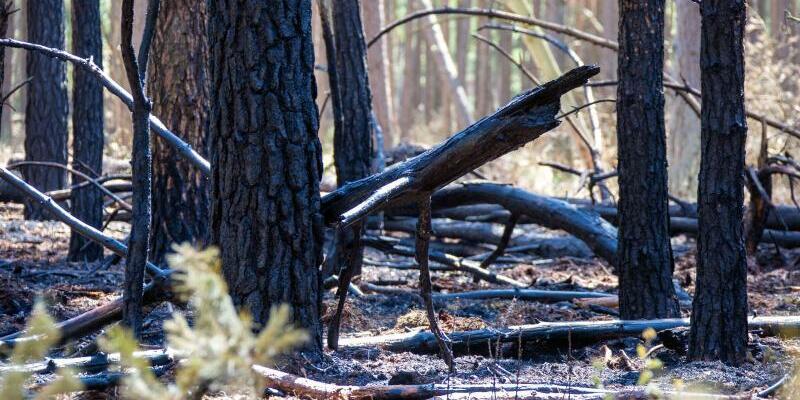 Waldbrand bei Lübtheen - Foto: Jens Büttner