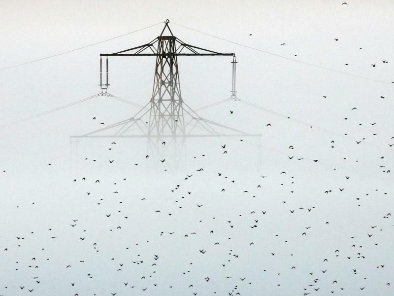 Strommast im Morgennebel - Foto: Thomas Warnack/dpa
