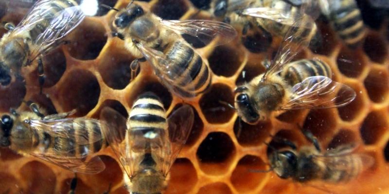 Bienen - Foto: über dts Nachrichtenagentur