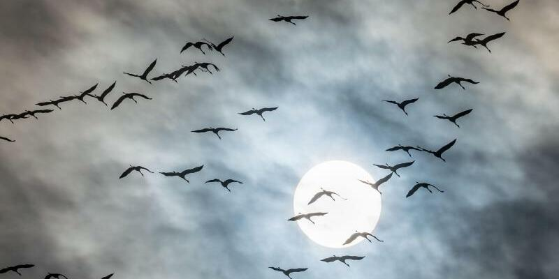 Zugvögel - Foto: Frank Rumpenhorst/dpa