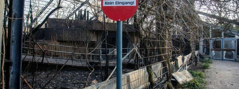 Brand im Krefelder Zoo - Foto: Christoph Reichwein/dpa