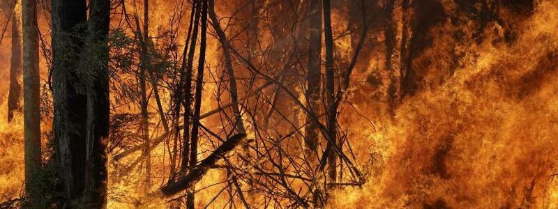 Buschbrände in Australien - Foto: Rick Rycroft/AP/dpa