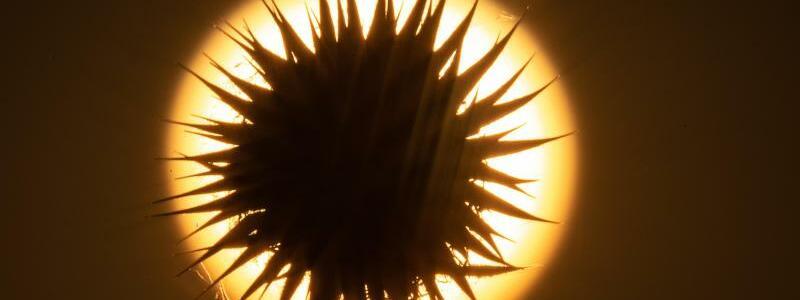 Sonne pur - Foto: Sebastian Gollnow/dpa