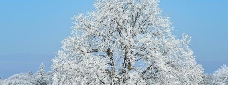 Schnee in Brandenburg - Foto: Patrick Pleul/dpa-Zentralbild/dpa
