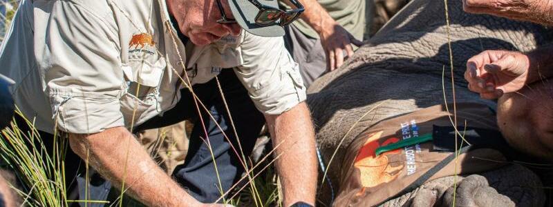 Kampf gegen Nashorn-Wilderer - Foto: Jessica Shuttleworth/University of the Witwatersrand/dpa