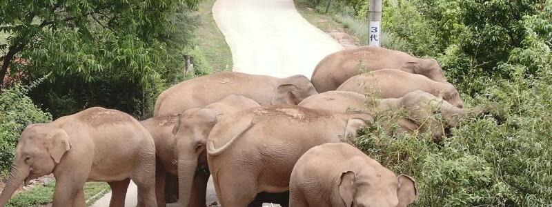 Elefantenwanderung - Foto: Uncredited/Yunnan Forest Fire Brigade/AP/dpa