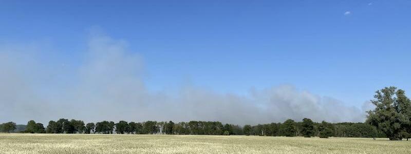 Waldbrand in Brandenburg - Foto: Guttmann/dpa