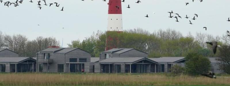 Insel Pellworm - Foto: Marcus Brandt/dpa