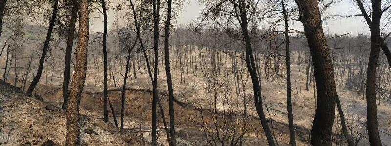 Verbrannter Wald - Foto: Thodoris Nikolaou/AP/dpa