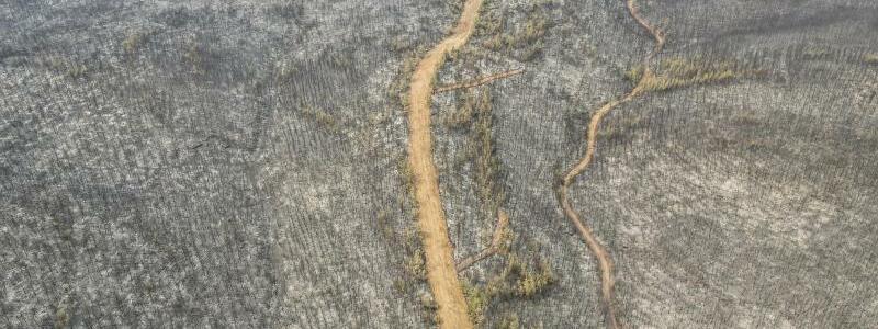 Niedergebrannter Wald - Foto: Uncredited/AP/dpa