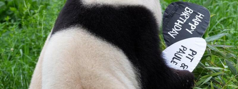 Panda-Mutter - Foto: Paul Zinken/dpa