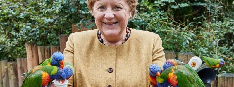Merkel im Vogelpark - Foto: Georg Wendt/dpa