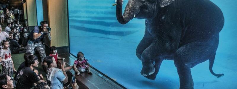 Elefant - Foto: Adam Oswell//Wildlife Photographer of the Year/PA Media/dpa
